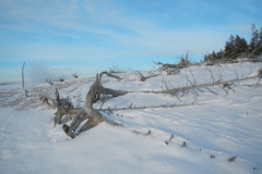Yellowstone-Winter-2014-60