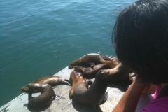 Yosimite-Big-Sur-Halfmoon-bay-2011-1
