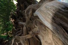 Yosimite-Big-Sur-Halfmoon-bay-2011-17