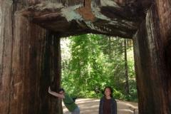 Yosimite-Big-Sur-Halfmoon-bay-2011-21