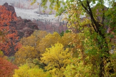 Zion-and-Bryce-2008-57